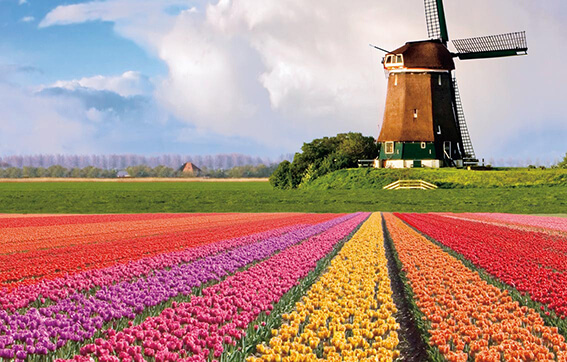 The Famous Windmills of the Netherlans
